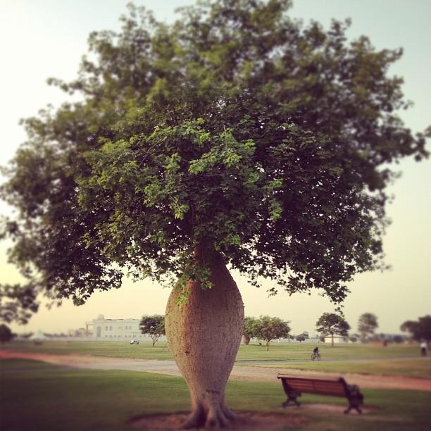 حدائق الدوحة في قطر
